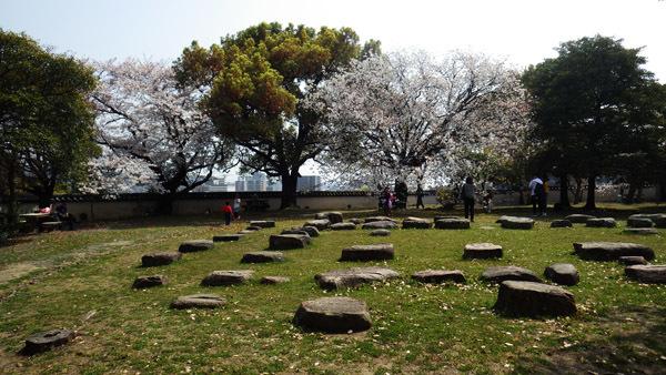 本丸庭園の桜