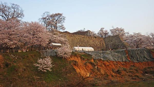 お城と桜 池の土手が崩れていました。