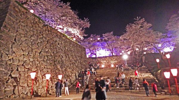 階段と石垣と桜