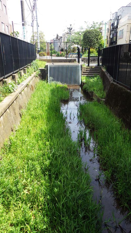 右側が三田用水口