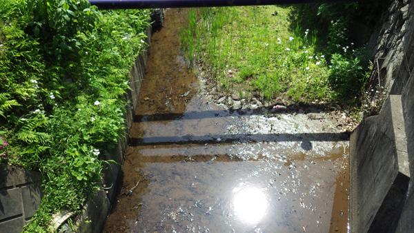 右の方に幡ヶ谷分水が