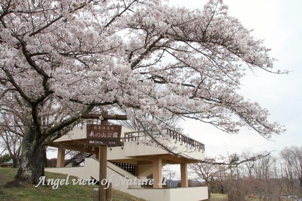 美の山公園1904120401①