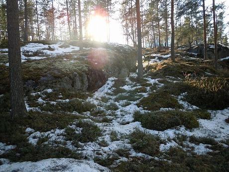 雪解けの林