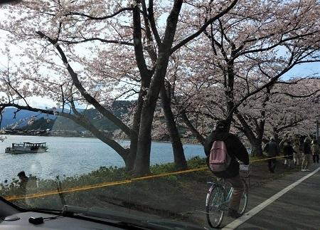 2019 海津 桜
