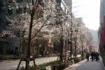 4.日本橋:室町江戸さくら通り-16D 1903q