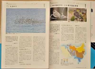 migration-japan-inside