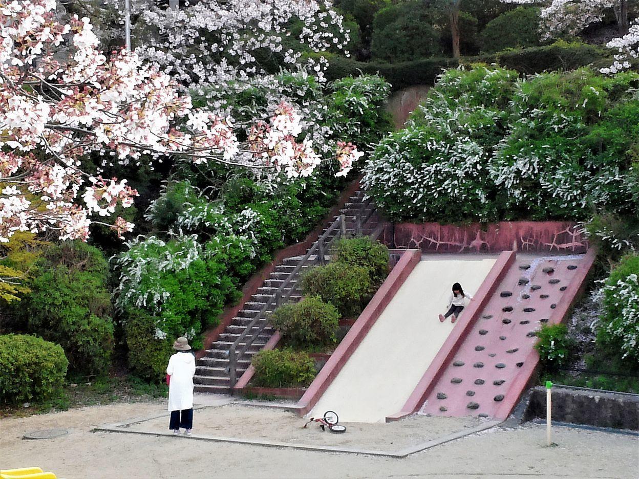 7.桜の咲く公園での親子(宝塚市)