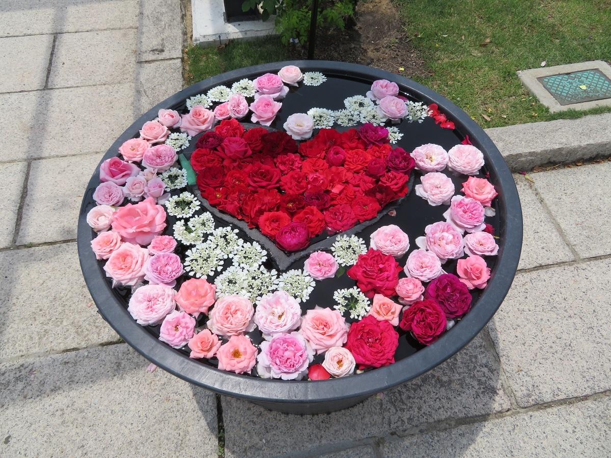 ⑫水鉢バラアート