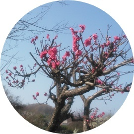 4 梅の花咲いたよ
