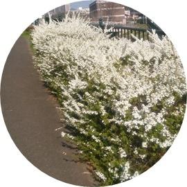 6 白い花たち