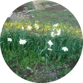 7小さな花たち