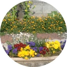 11 植木鉢の花たち