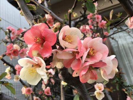 あっという間に春!お花と歌舞伎と・・・