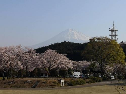 20190406桜1