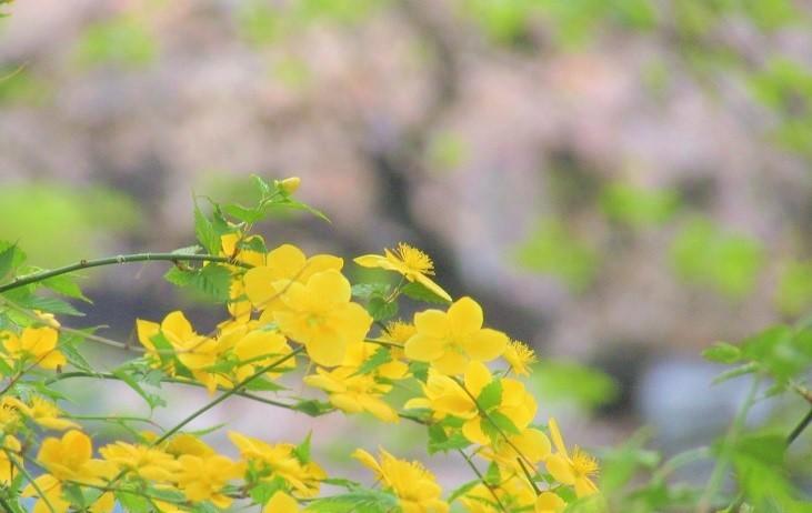 angyohara190406-110.jpg