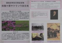 sakurasou190407-203.jpg