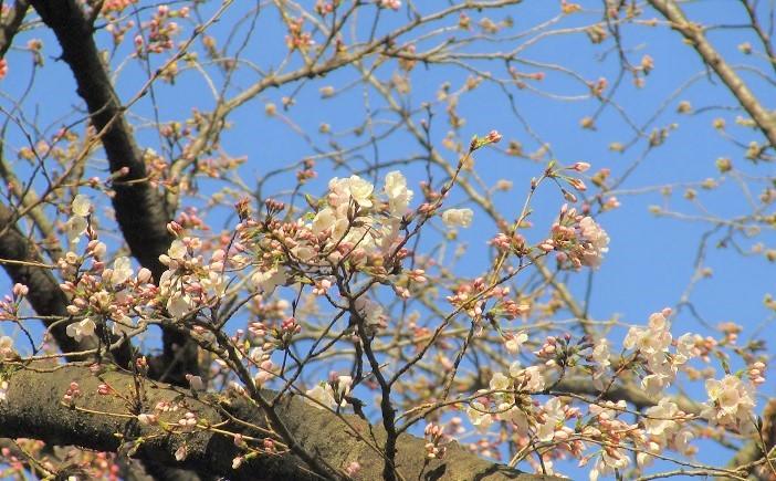syakujii190324-101.jpg