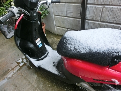 春の雪H31年