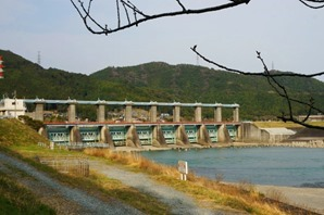 船明ダム 桜