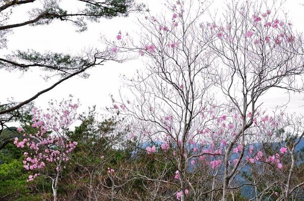 3大タヲ山190417