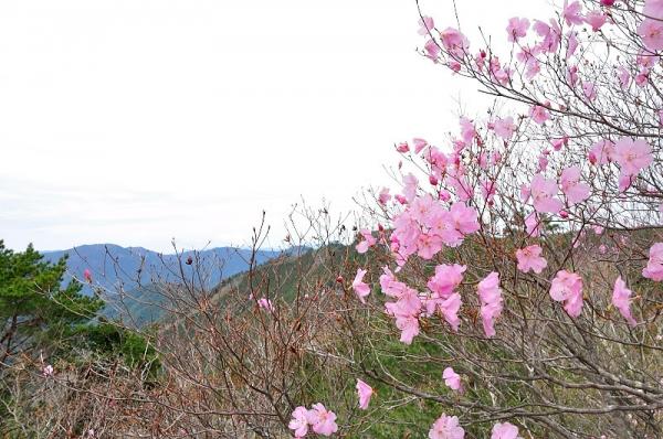 6大タヲ山190417