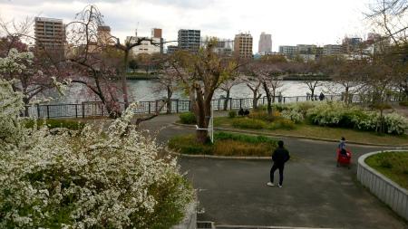 20190331桜之島公園1