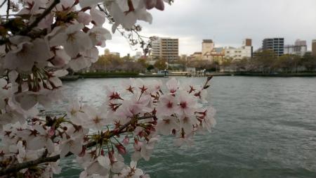 20190331桜之島公園2