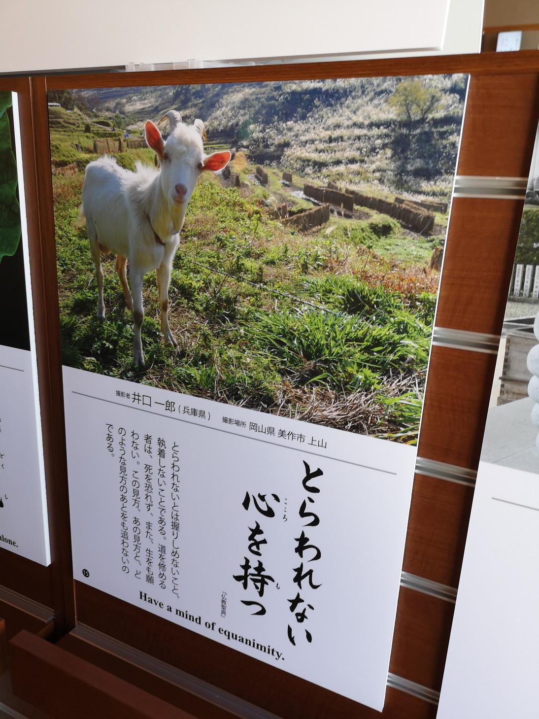 20190519_築地本願寺カフェTumugi (14)