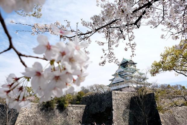 2019年4月・花見・桜・大阪城公園①
