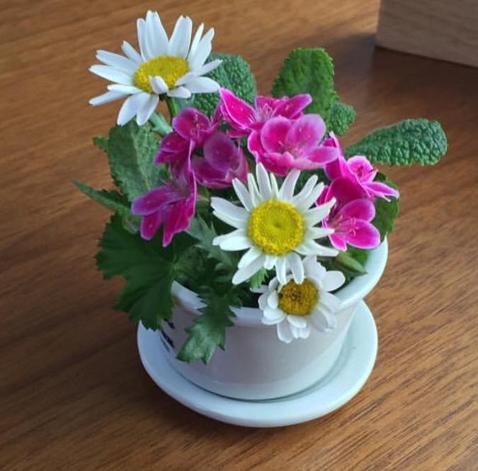 平成31年04月02日花の写真