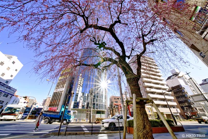 絶景探しの旅 - 0900 春が来た!街路の枝垂れ桜 (東京都 八王子市)