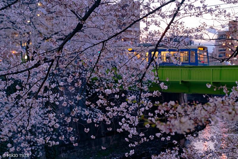 絶景探しの旅 - 0910 桜咲く夕暮れの神田川 (東京都 豊島区)