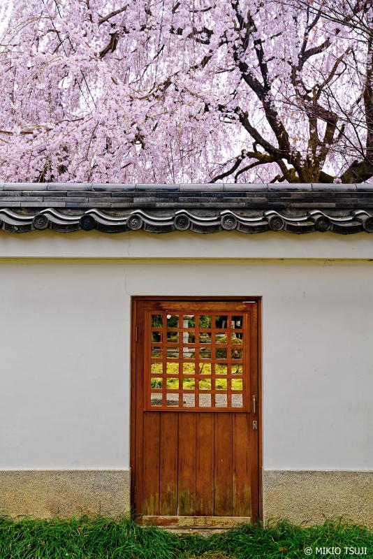 絶景探しの旅 - 0913 桜の門 (本満寺/京都市 上京区)