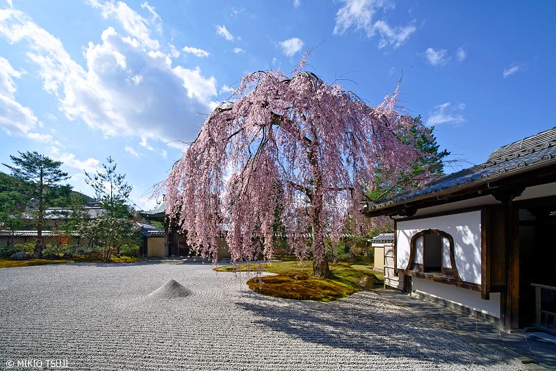 絶景探しの旅 - 0915 桃山文化の伝わる庭園と枝垂れ桜 (高台寺/京都市 東山区)