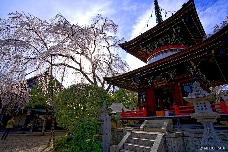 絶景探しの旅 - 0919 吉野山 東南院の枝垂れ桜 (奈良県 吉野町)