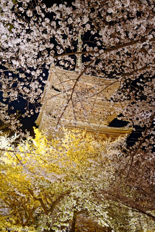 絶景探しの旅 - 0924 金銀に輝く夜の桜屏風 (東寺/京都市 南区)