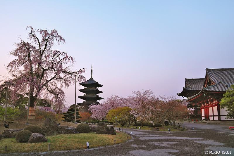 絶景探しの旅 - 0920 桜咲く夜明けの東寺 (京都市 南区)