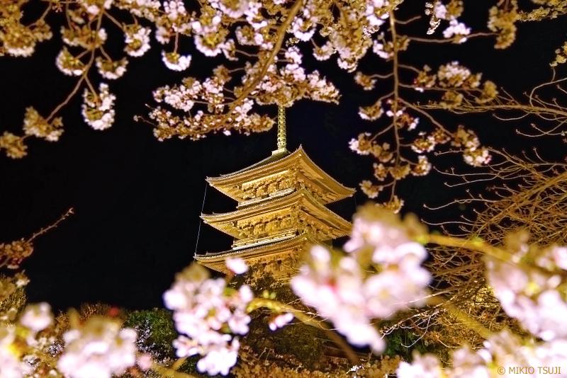 絶景探しの旅 -0923 春の夜の京都桜絵巻 (東寺/京都市 南区)