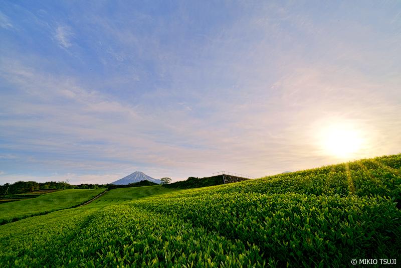 絶景探しの旅 - 0949 朝日の差し込む茶畑 (今宮の茶畑/静岡県 富士宮市)