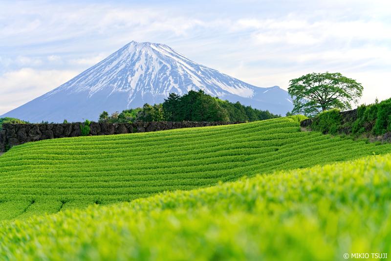 絶景探しの旅 - 0951 富士山の見える茶畑 (今宮の茶畑/静岡県 富士宮市)