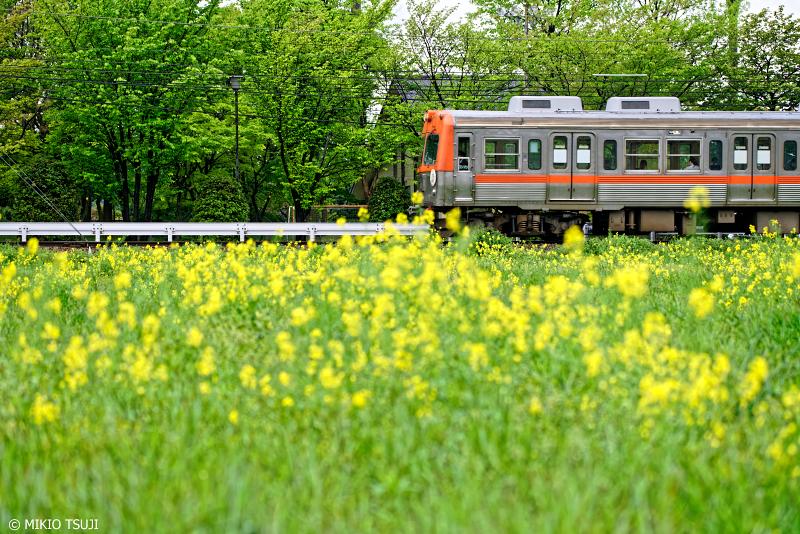 絶景探しの旅 - 0953 新緑と菜の花畑を走る北陸鉄道 (石川県 白山市)