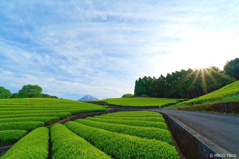 絶景探しの旅 - 0956 朝日が差し込む大淵笹場の茶畑 (静岡県 富士宮市)