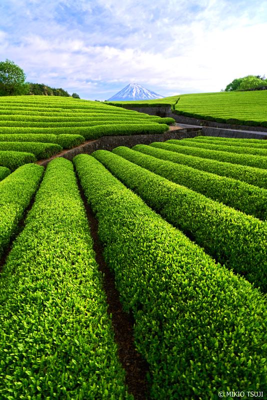 絶景探しの旅 - 0957 富士山と茶畑 (大淵笹場の茶畑/静岡県 富士宮市)