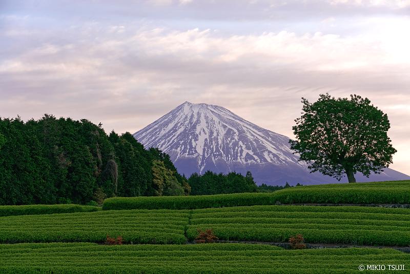 絶景探しの旅 - 0955 夜明けの富士山の見える茶畑 (大淵笹場の茶畑/静岡県 富士宮市)