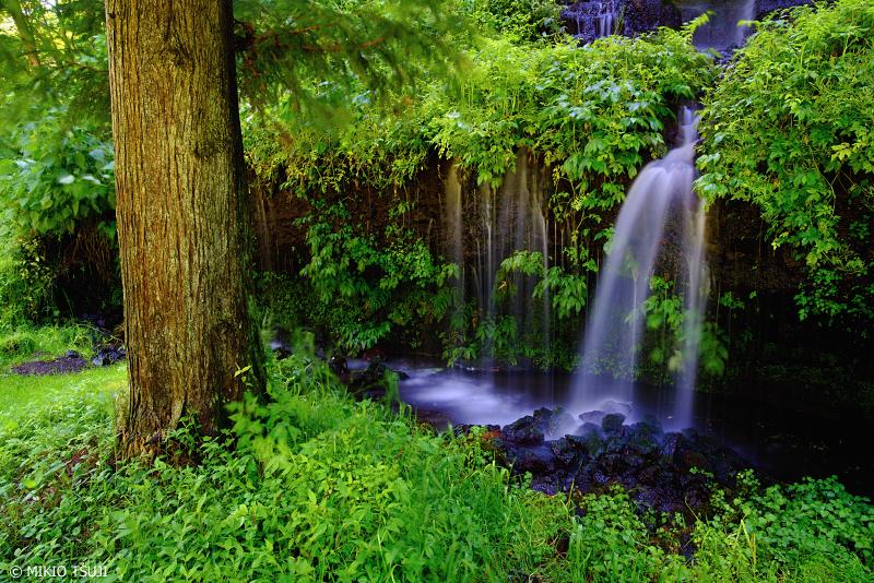 絶景探しの旅 - 0991 雨上がりの深緑の中で (山梨県 都留市)